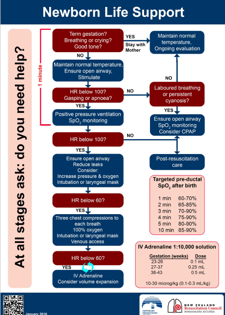 Neonatal Resus Flowchart available in full size pdf from the ARC at Neonatal Resus Flowchart available in full size pdf from the ARC. https://resus.org.au/guidelines/flowcharts-3/